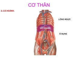 cohoanh