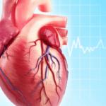 Dược thảo nào là bạn của trái tim?